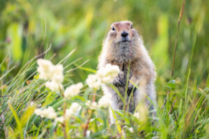 What Women Can Learn From Groundhog Day!