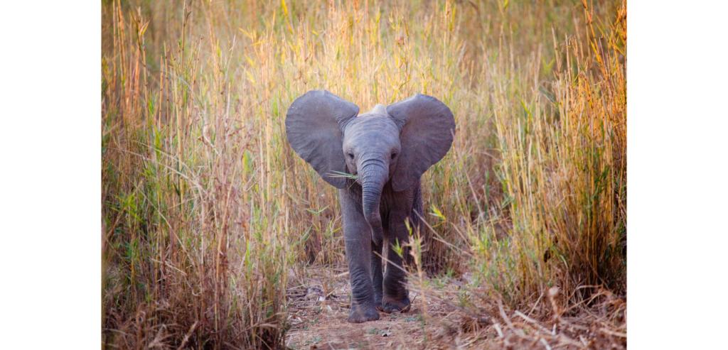 Building Your Elephant Skin  |  Andria Schultz  |  SUE Talks