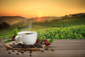 Let's Talk Coffee - Organic Coffee That Is!