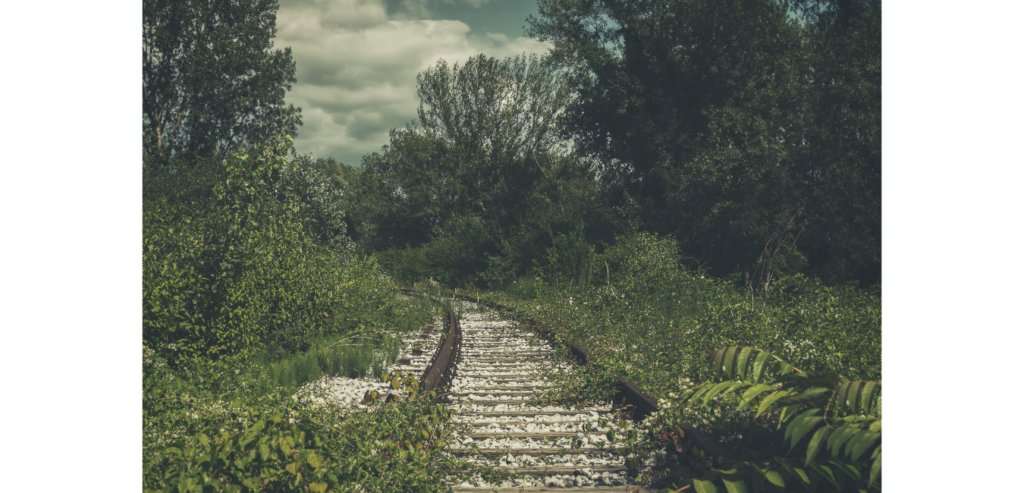 The Road Not Taken | Lucy Kelleher | SUE Talks