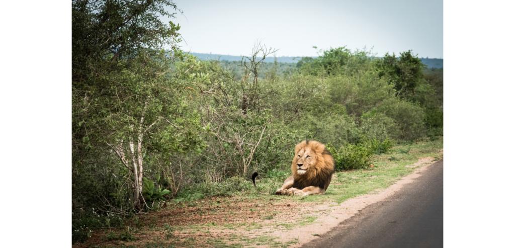 How I Found Myself in Africa | Kay Trotman | SUE Talks